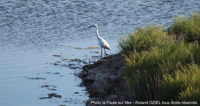 La Faute sur Mer - Réserve Ornithologique de la Pointe d'Arcay