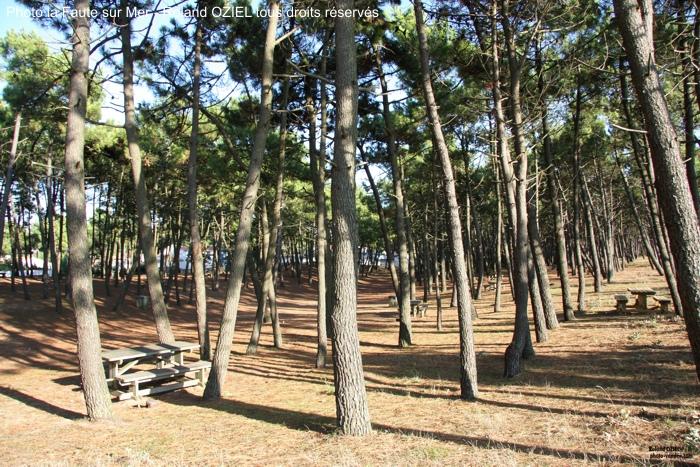 Forêt de Pins de la Faute sur Mer