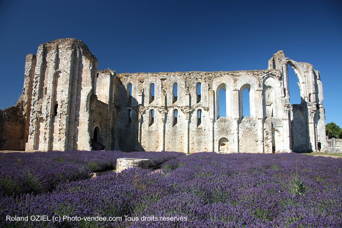 Abbaye de Maillezais et champ de lavande